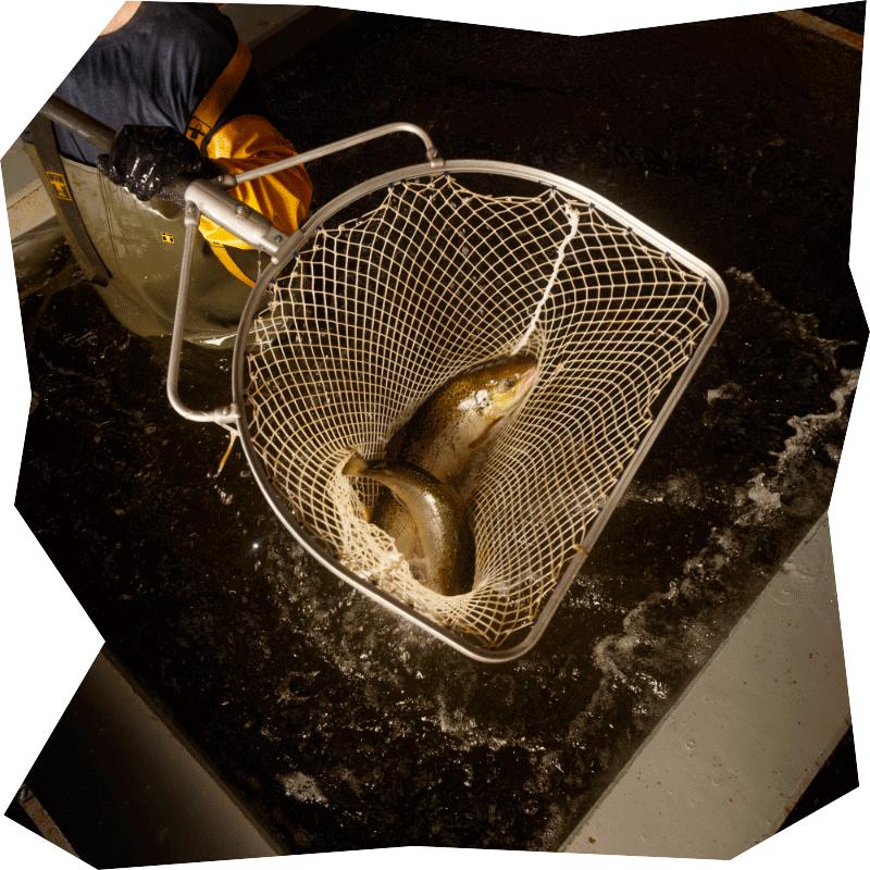 image-1-cabyne-saumon
