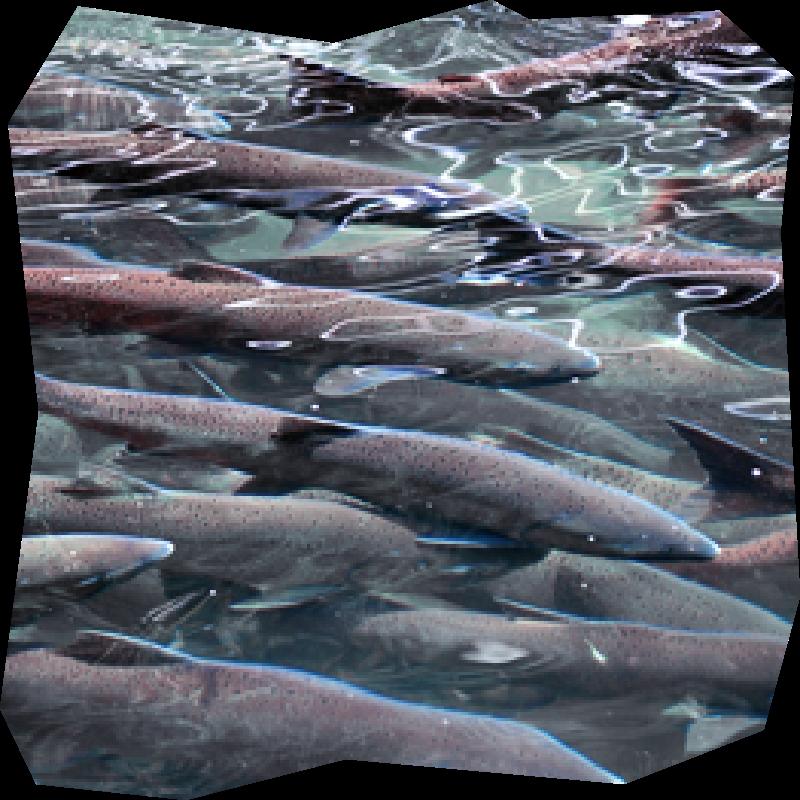 photo-6-saumon-disigny